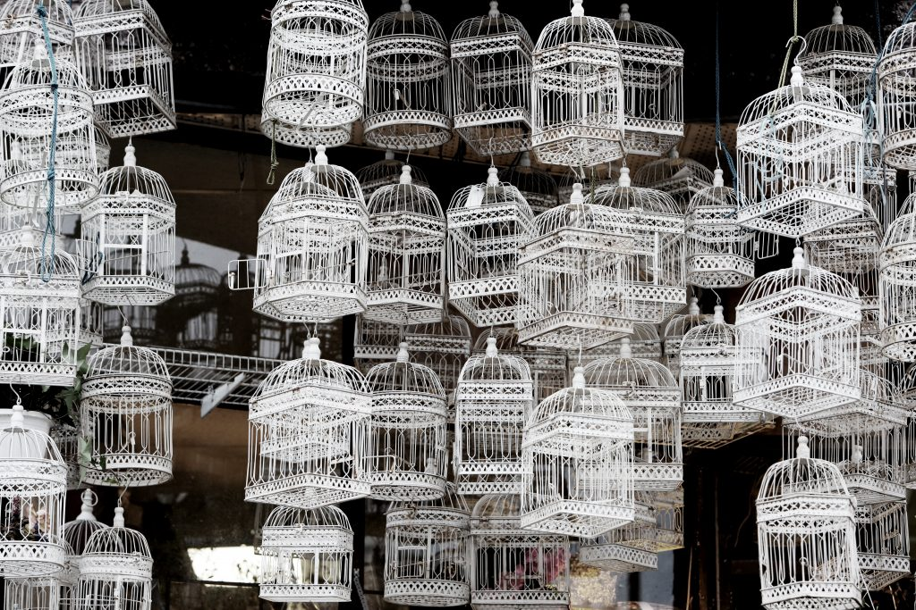 2016-03-life-of-pix-free-stock-bird-cages-white-leeroy